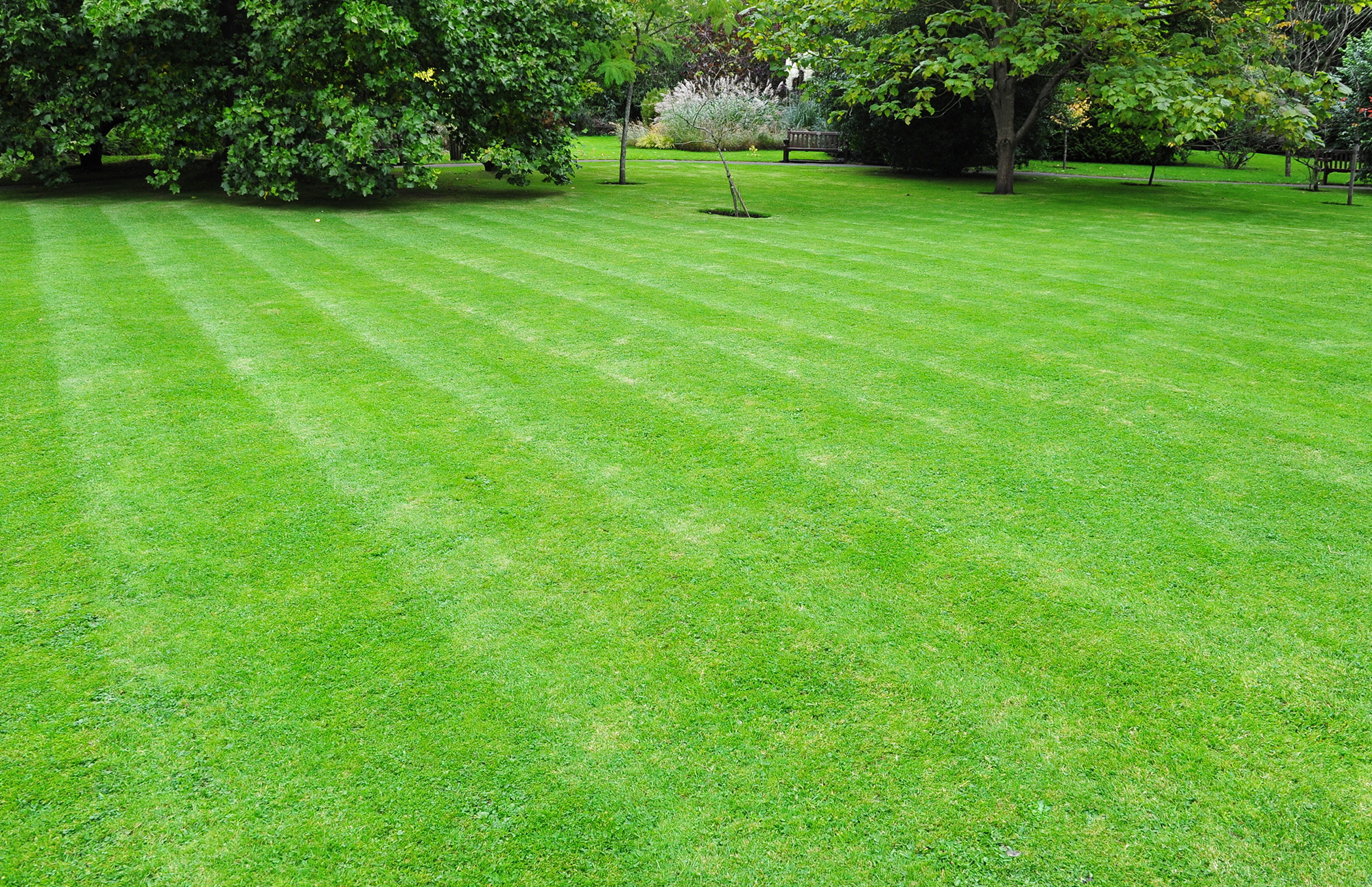 Marks turf landscapes lawn turf nottingham mansfield our nottingham turf services include workwithnaturefo