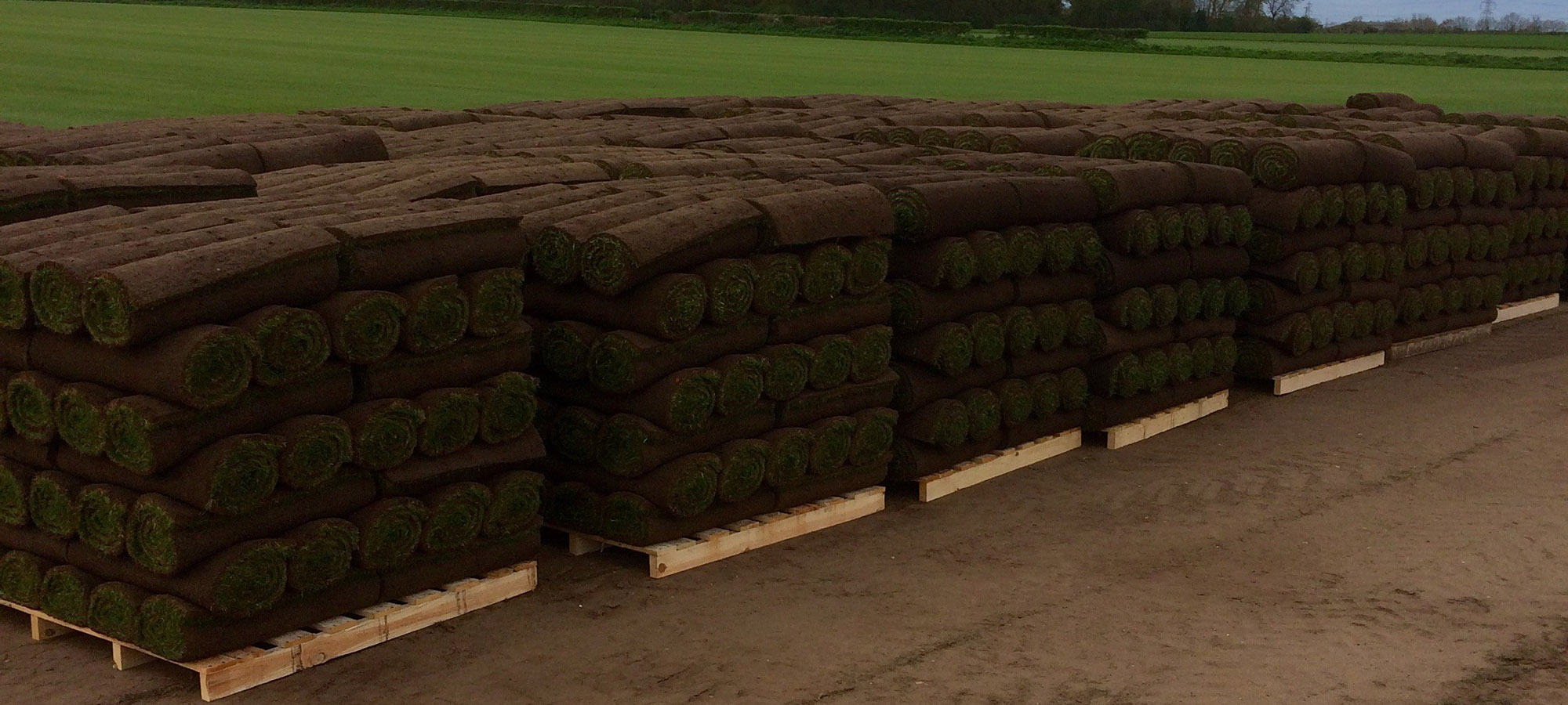 Lawn Turf Supplies