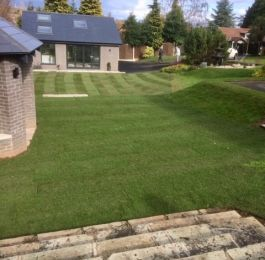 A large lawn laid at Bramcote, Nottingham: Click Here To View Larger Image